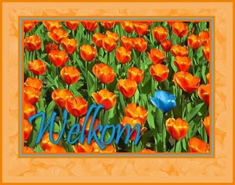 clubset tulp welkom…